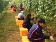 農家生活体験プログラム.3