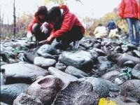 化石採取ツアー
