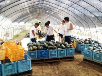 農家生活体験プログラム.6